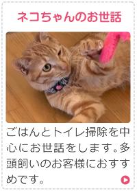 ネコちゃんのお世話
