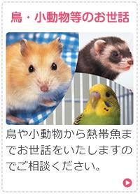 鳥・小動物等のお世話