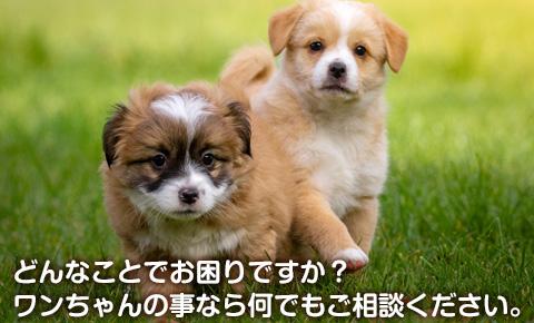 犬のトリミング、ペットホテル、犬のしつけ、ペットシッター、老犬介護などペットのことなら、刈谷のペットショップ ペットネット