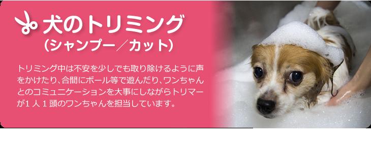 刈谷、安城、大府、東浦町の犬のトリミング、ホテル、しつけ、シッター、老犬サポートの総合ペットショップ【PETNET】。送迎も承ります。